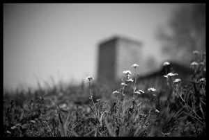 Flowers_in_Auschwitz_by_kallio